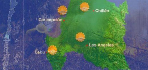 Preocupación en Conaf por exceso de quemas y calor en la Región del Bio Bío