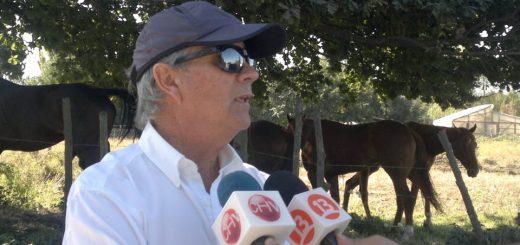 Dueño de caballos fina sangre robados de Club Hípico, sospecha de posible mafia local