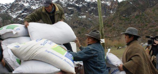 En Alto Bio Bio comenzó uno de los mayores rescates ganaderos efectuados en el país
