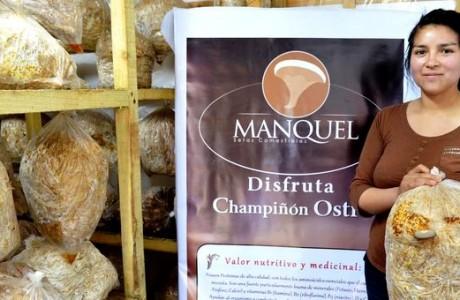 Angelina de Chacayal Norte recibe Premio Pyme Innovadora por cultivo de hongos ostra