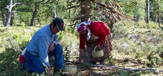 Comunidades indígenas serán parte de la elaboración de  la Estrategia Nacional de Cambio Climático
