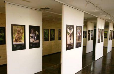 CMPC celebra primer año de Artequín Los Ángeles con atractiva exposición sobre biodiversidad